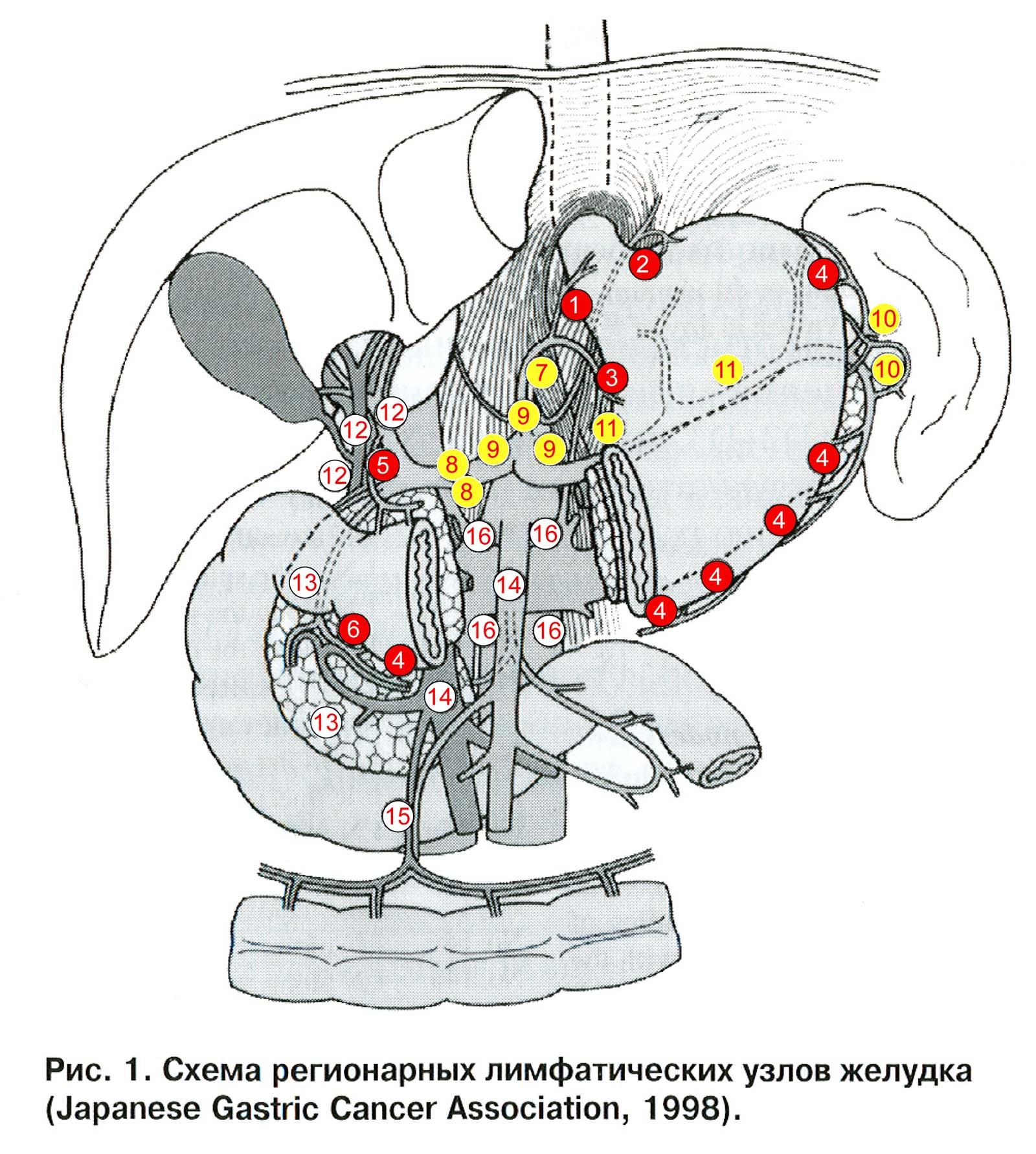 схема лимфоузлов человека - Только схемы.